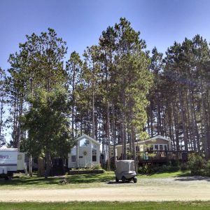 mn rv sites with pine tress